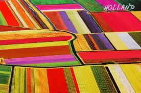 Tulip fields 2